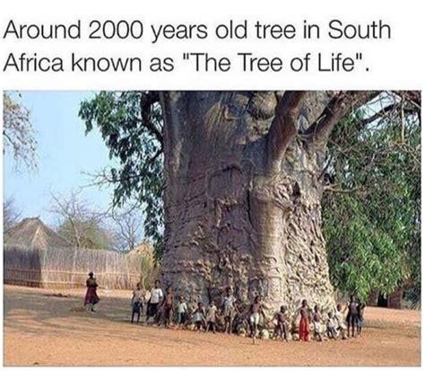 Tree Memes - the tree of life in south africa meme by peebee memedroid