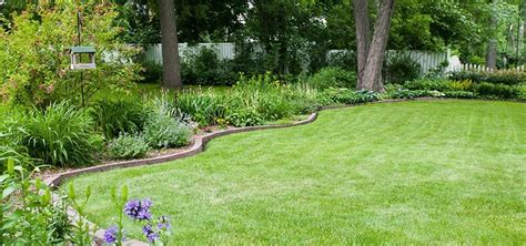 How To Grow Grass In Backyard by Yard Care