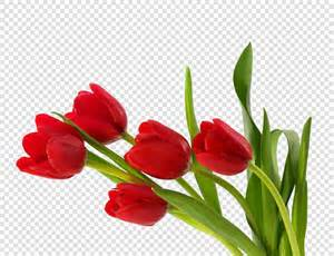 flowers bouquet tulips png image