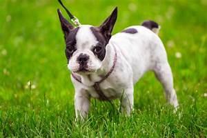 Hundehaltung Mietwohnung 2017 : tierhaltung archives seite 2 von 3 ~ Lizthompson.info Haus und Dekorationen