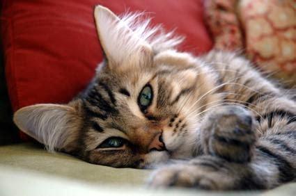 tun wenn die katze durchfall hat hilfe und tipps bei