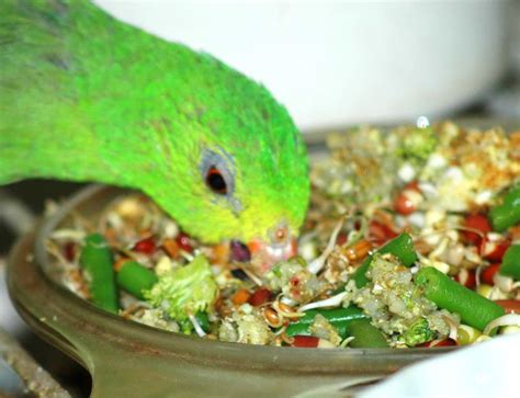 best bird food ever organic bird food parrot food bird