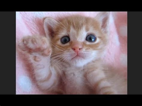 ♥happy Cats Compilation  Cutest Cat Ever 2018♥ #5 Youtube