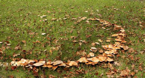 Im Rasen Kreisförmig by Rasenkrankheiten Wolf Garten