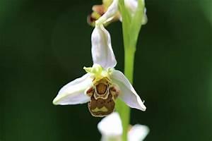 Bienen Vertreiben Essig : juni 2016 xenophora ~ Whattoseeinmadrid.com Haus und Dekorationen