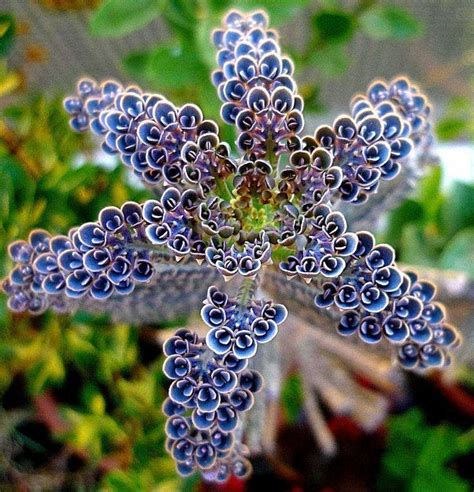 of thousands poisonous 25 best ideas about cactus types on pinterest types of succulents indoor succulents and list