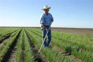 American Farmer Farming