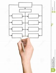 Hand Drawing Blank Organization Chart Stock Photos