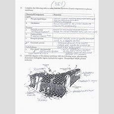Cell Membrane Coloring Worksheet Answer Key  Coloring Pages  Cell Membrane, Teaching Biology