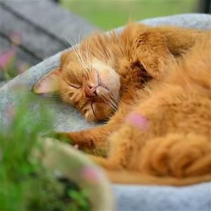 Katzenzubehör Auf Rechnung : katzenbett shelly katzenbetten stylecats design kratzbaum ~ Themetempest.com Abrechnung