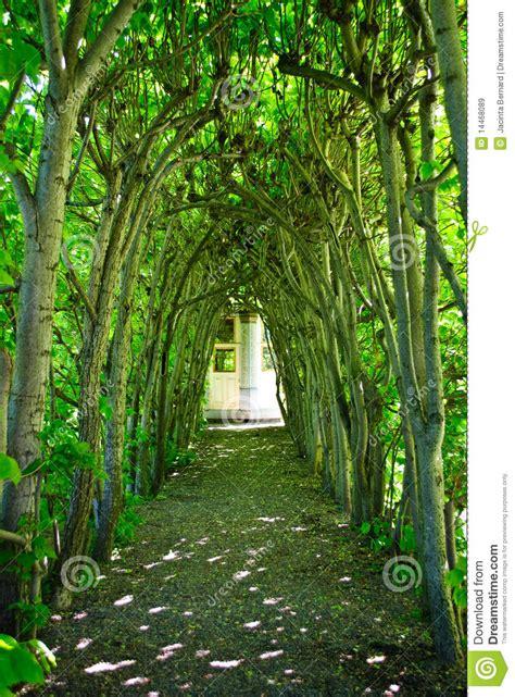 green tree archway stock image image  walkway green