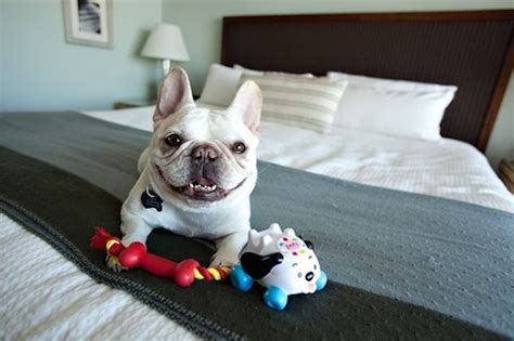 pet friendly hotels how to find one and what to expect
