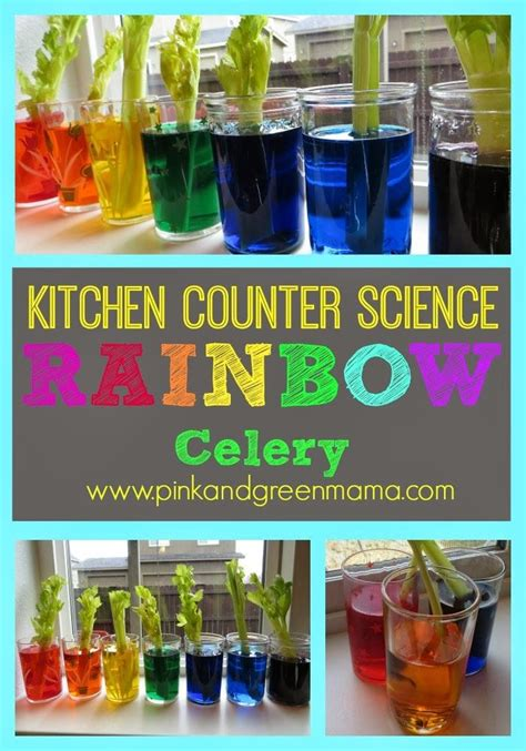 Kitchen Science Fair Experiments by Kitchen Counter Science With Rainbow Celery