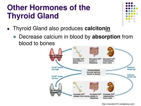 ppt metabolism powerpoint presentation id 6894295