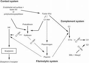 The Contact  Complement  And Fibrinolytic Systems  C1