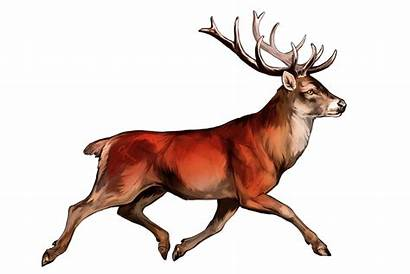 Deer Oxpecker Trotting Deviantart Favourites