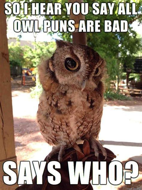 images  owl puns  pinterest discover