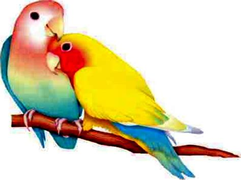 very high quality two colorful birds bird blue images of