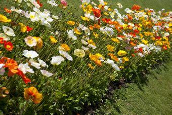 garden chelles horaires 26 images d 233 co jardin pente amenagement nantes 18 jardin