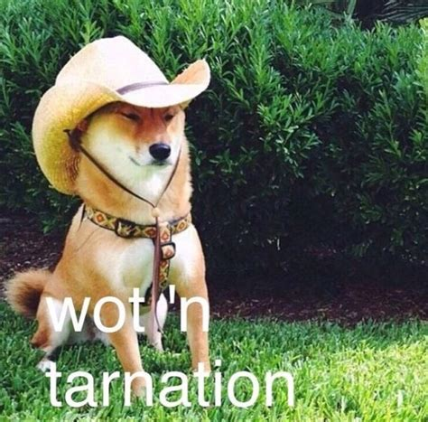 What In Tarnation Memes - you will either love or hate the new what in tarnation meme thechive