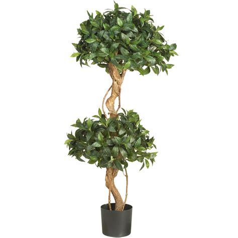 fresh real topiary trees homesfeed