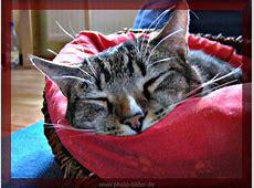 Bilder von Tieren Katze schlafend kostenlos zum
