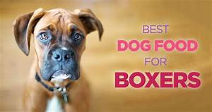 best dog food for boxers high protein diet is the key With best dog food for boxers