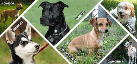 Vitromex Tile Nevada Sand by 18 Designer Dogs Hybrid Breeds Brug Brussels