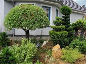 garten anders formschnitt fur geholze beispiele und tipps With whirlpool garten mit eibe bonsai
