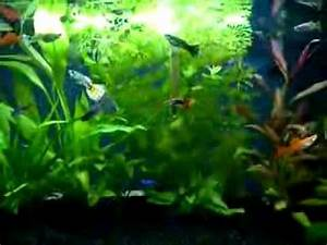 Tropical Fish Tank 54L with Guppies Platies Neon Tetras