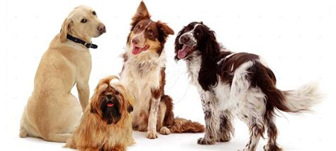 dog breeds pupcraze