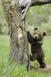 So Cute Bear Cub Pictures, Photos, and Images for Facebook ...