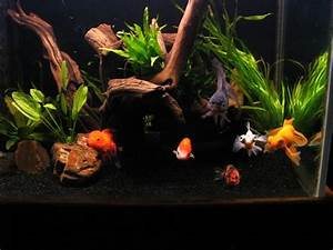 21 best images about Goldfish tank ideas on Pinterest ...