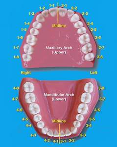 Pin By Ahmad Ali On Dentistry