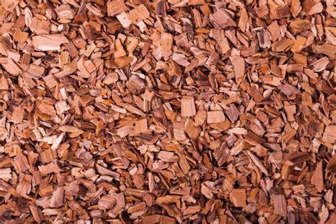 Bonsai Bäume Pflege 3243 by Hecke Schneiden Berlin Gartenpflege Hausmeister