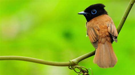 Bird Animal Beautiful Wild Wings Exotic Birds