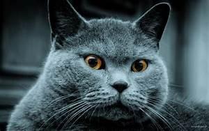 Hd, Fat, Cat, Wallpaper