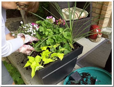 Summer Containers  Fast, Easy And Cheap #gardening With