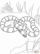 Snake Coloring King California Garter Drawing Printable Snakes Tiger Mamba Python Flower African Rock Plains Sheets Getdrawings Indigo Kingsnake Supercoloring sketch template