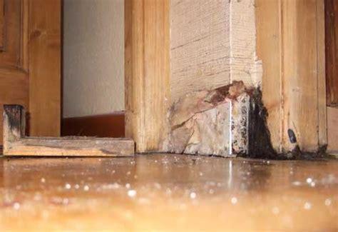 Mäuse Hinter Der Wand by 220 Ber Uns