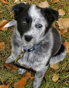 mix dog pictures photos pics images gallery breed puppies
