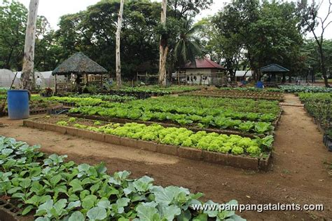 Ph For Vegetable Garden the importance of urban gardening container gardening