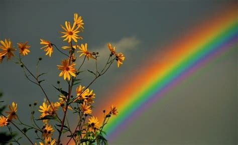 bb7711 color wallpapers page 2 rainbow flower colorful
