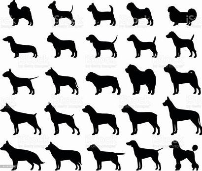 Dog Vector Silhouettes Breeds Isolated Terrier Bull