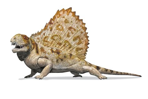 We've Drawn Iconic Sail-wearing Dimetrodon Wrong For 100