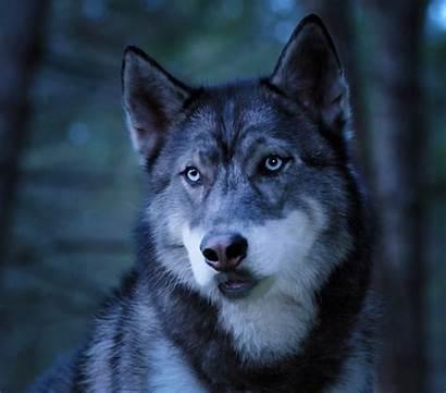 Wolf Pup Academy Fandom Wiki Wikia Relationships