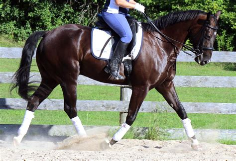 horse forehand being means riding accordion trot moment horses listening developing impulsion quick tips ride longitudinal horselistening