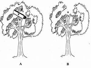 Schematic Representation Of Open