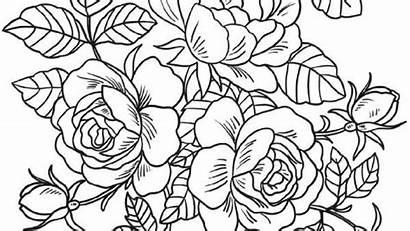 Bunga Gambar Mawar Mewarnai Sketsa Batik Hitam