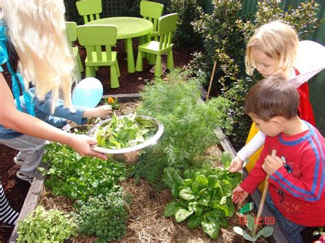 community preschool and nursery vegetable patch cottage of gladesville 327